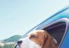 V teplom počasí je horúco aj psom.