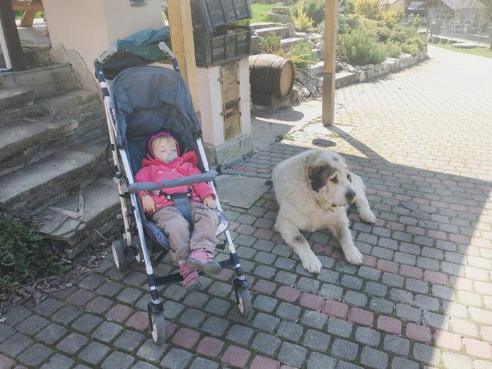 Pes - strážca