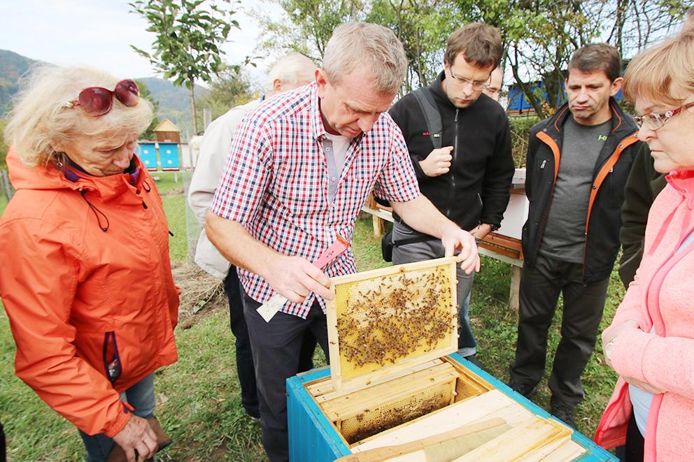 Kontrola plástu so včelami